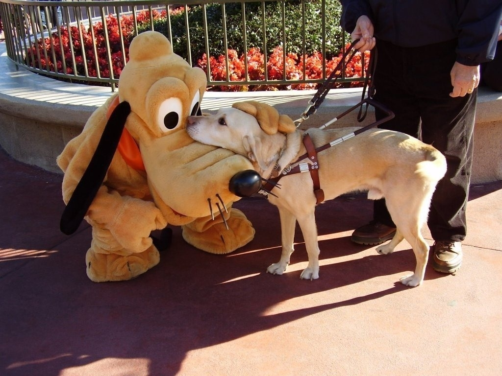 Guide dog meets Pluto